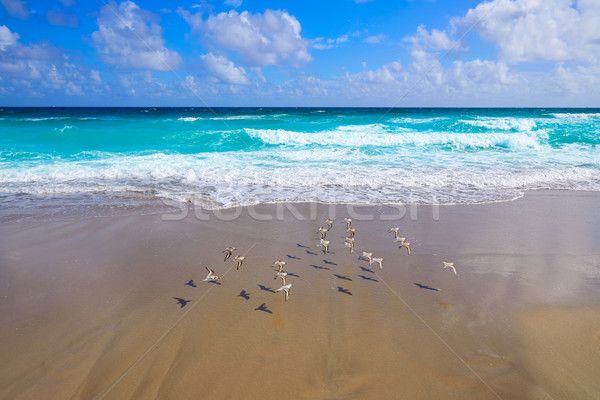 Palm Beach beach coastline Florida US Stock photo © lunamarina