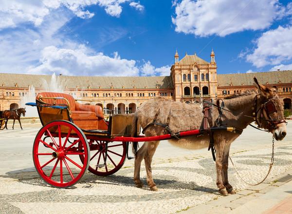 Asino trasporto Spagna piazza tramonto cavallo Foto d'archivio © lunamarina