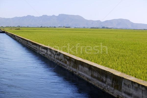 Ryżu zbóż zielone pola niebieski nawadnianie Zdjęcia stock © lunamarina