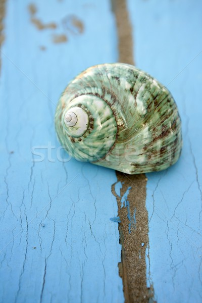 blue wooden beach floor green sea shell Stock photo © lunamarina