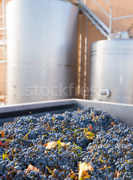 cabernet sauvignon vinemaking with grapes and tanks Stock photo © lunamarina