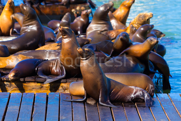 San Francisco Pier 39 lighthouse and seals California Stock photo © lunamarina