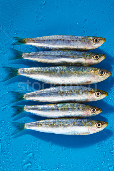 Sardine fishes in a row on blue wet background Stock photo © lunamarina
