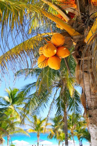 Kókuszpálma fák Karib trópusi tengerpart víz természet Stock fotó © lunamarina