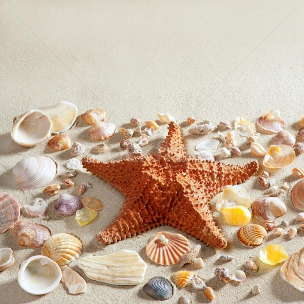 beach white sand starfish many clam shells summer Stock photo © lunamarina