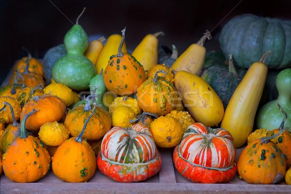 秋 カボチャ コレクション ハロウィン 野菜 食品 ストックフォト © lunamarina