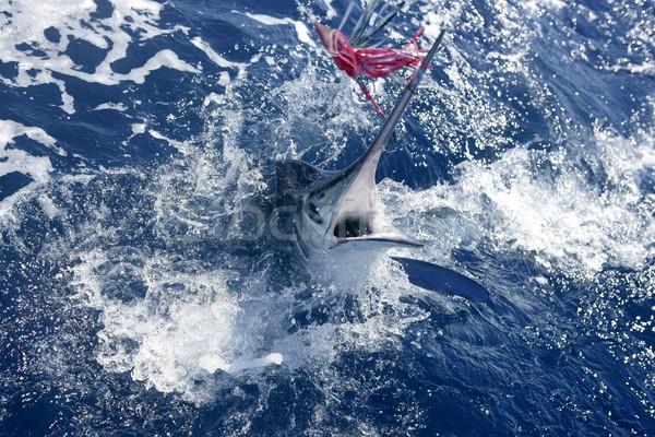 Beyaz büyük oyun spor balık tutma mavi Stok fotoğraf © lunamarina