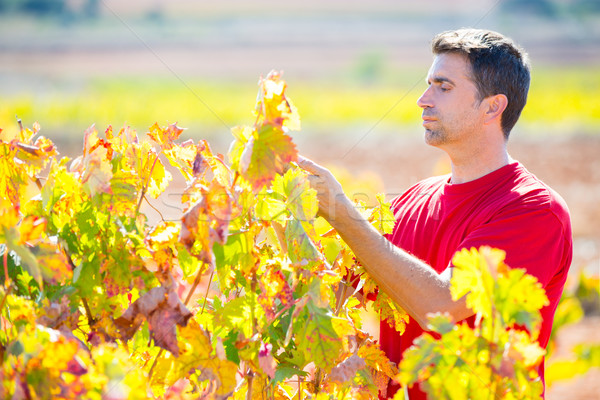 Mediterranean vineyard farmer checking grape leaves Stock photo © lunamarina