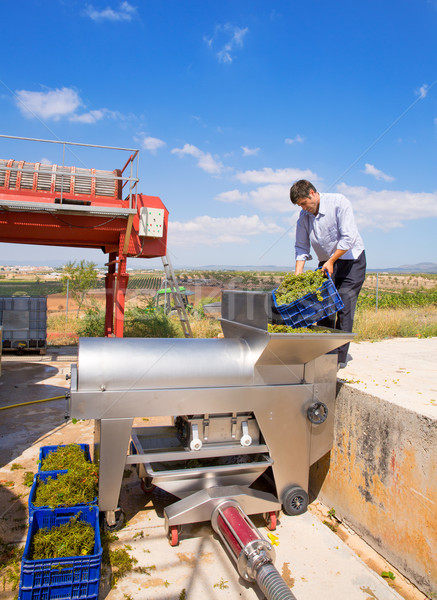 chardonnay wine grapes winemaker in destemmer Stock photo © lunamarina