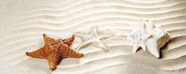 Zdjęcia stock: Karaibów · tropikalnych · falisty · biały · piasek · Rozgwiazda · powłoki