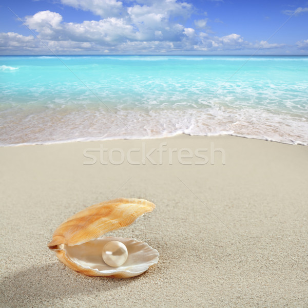 Stock photo: Caribbean pearl on shell white sand beach tropical