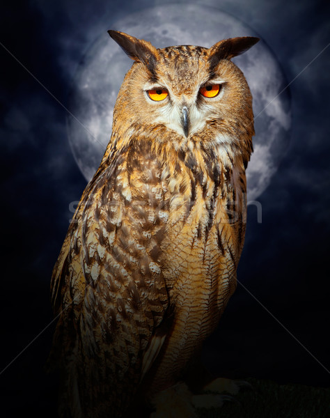 Bubo bubo eagle owl night bird full moon Stock photo © lunamarina