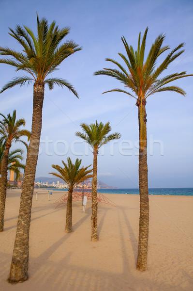 Дерево в испании аликанте отзывы