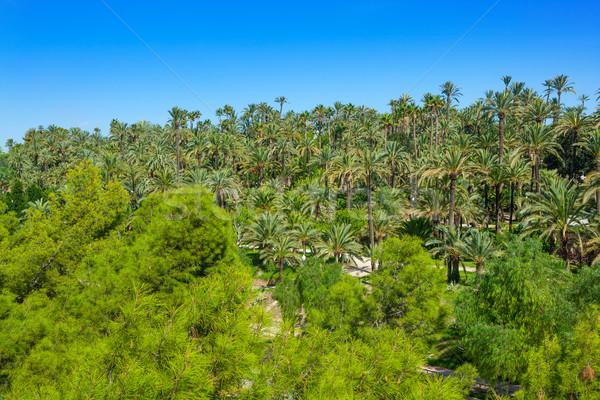 Veel palmbomen park gemeenschap Spanje zomer Stockfoto © lunamarina