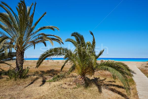 Praia Espanha palmeiras água natureza paisagem Foto stock © lunamarina