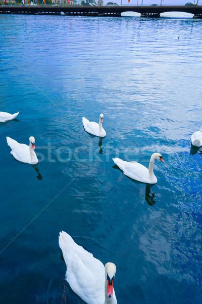 İsviçre su mavi seyahat grup Stok fotoğraf © lunamarina
