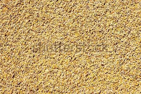 cereal wheat grain texture pattern Stock photo © lunamarina