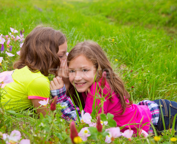 happy twin sister girls playing whispering ear in meadow Stock photo © lunamarina