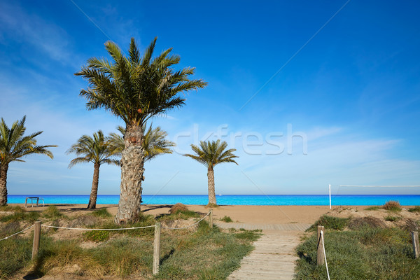 ビーチ ヤシの木 スペイン 地中海 水 自然 ストックフォト © lunamarina
