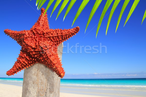 Caraïbes starfish bois pôle plage Palm Photo stock © lunamarina