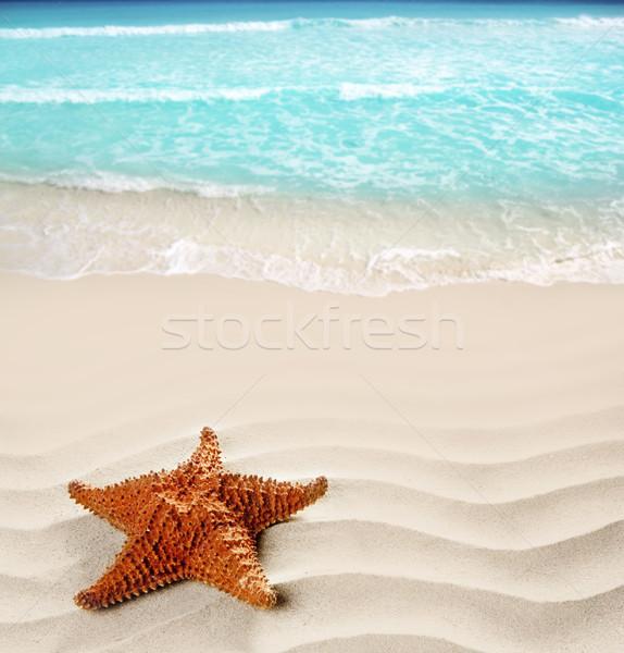 Foto stock: Caribbean · praia · starfish · ondulado · areia · branca · verão