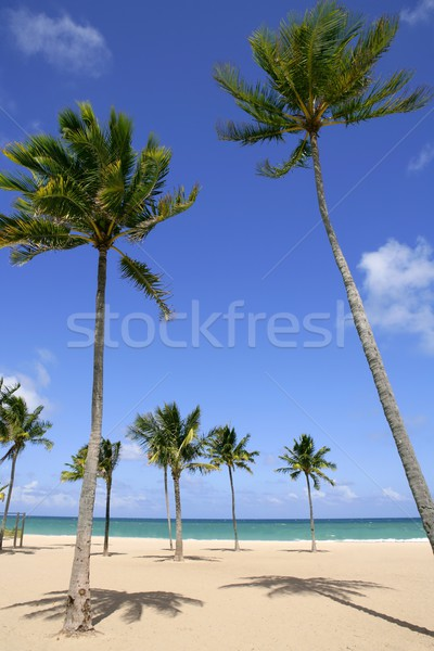 Beach in tropical Florida day with palm trees  Stock photo © lunamarina