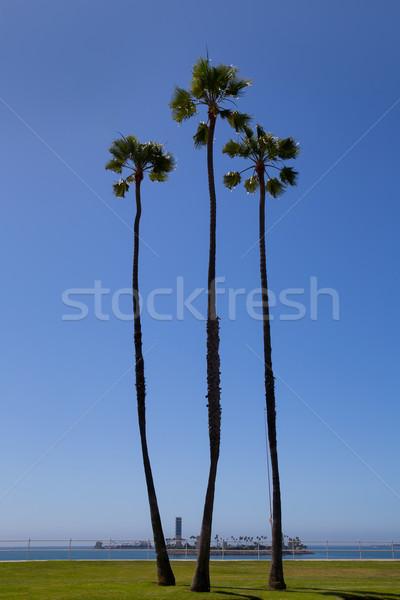 Stok fotoğraf: Kaliforniya · palmiye · ağaçları · mavi · gökyüzü · long · beach · yüksek · grup