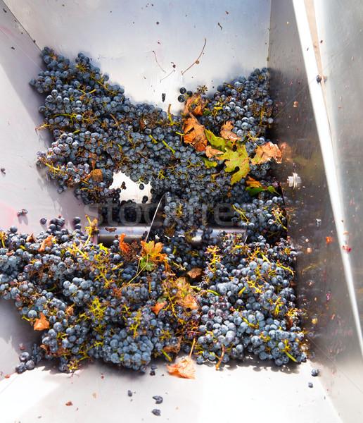 Vinificazione uve frutta industria farm Foto d'archivio © lunamarina