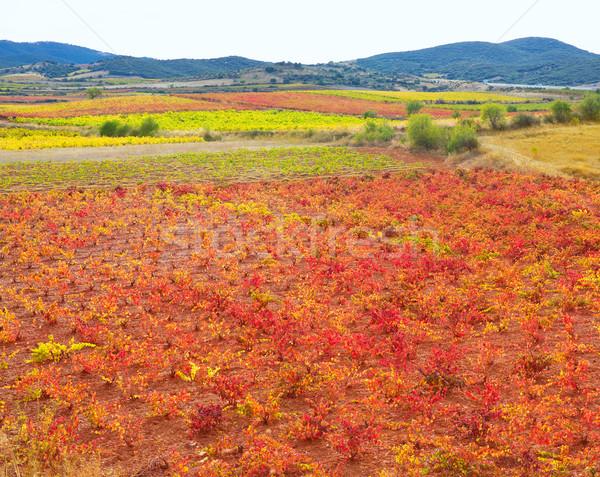 Carinena and Paniza vineyards in autumn red Zaragoza Spain Stock photo © lunamarina