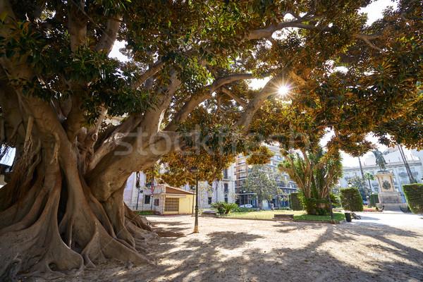 Valencia Parterre park big ficus tree in Spain Stock photo © lunamarina