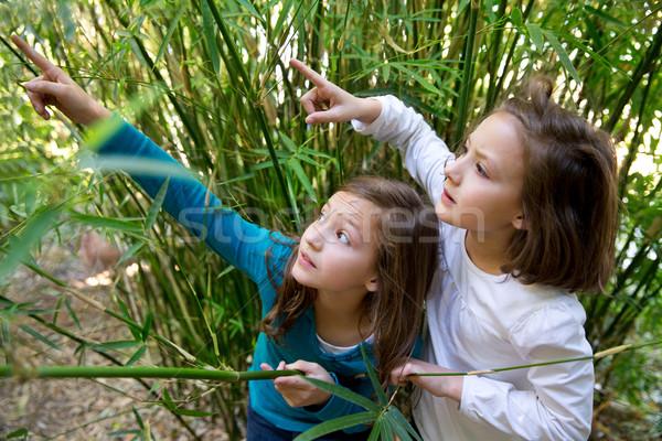 Irmã gêmeo meninas jogar natureza indicação Foto stock © lunamarina