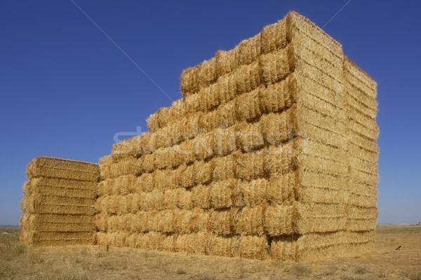 Cereal barn with square shape stack on columns Stock photo © lunamarina