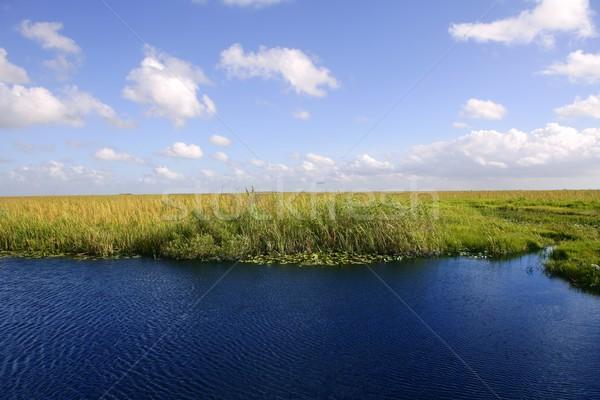 Сток-фото: Blue · Sky · Флорида · зеленый · растений · горизонте · природы