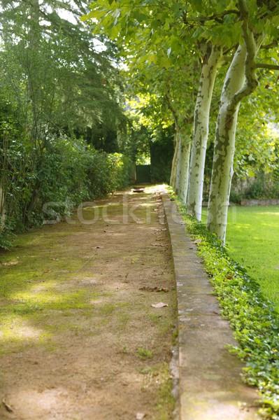 Zöld park folyosó fák legelő erdő Stock fotó © lunamarina
