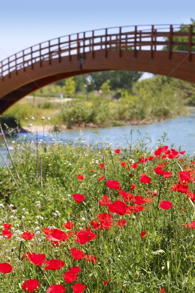 red poppies flowers meadow river wooden bridge Stock photo © lunamarina