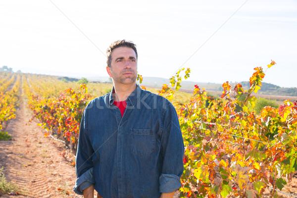 Mediterranean vineyard farmer relaxed looking wines Stock photo © lunamarina
