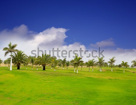Stock photo: golf course tropical palm trees  Mexico
