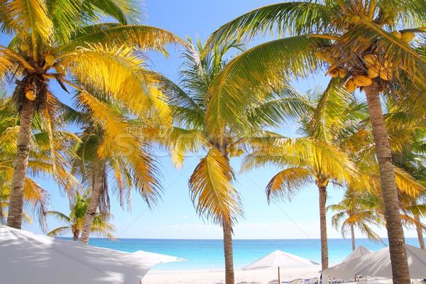 Foto stock: Cocotero · árboles · Caribe · playa · tropical · agua · naturaleza
