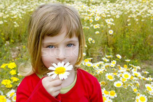 blond little girl smeling daisy spring flower meadow Stock photo © lunamarina