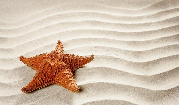 beach white wavy sand starfish summer vacation Stock photo © lunamarina