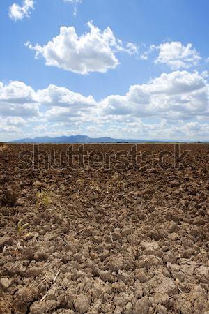 plough plowed brown clay field blue sky horizon Stock photo © lunamarina