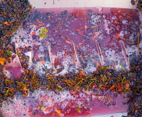 Vinificação suco fruto indústria fazenda Foto stock © lunamarina