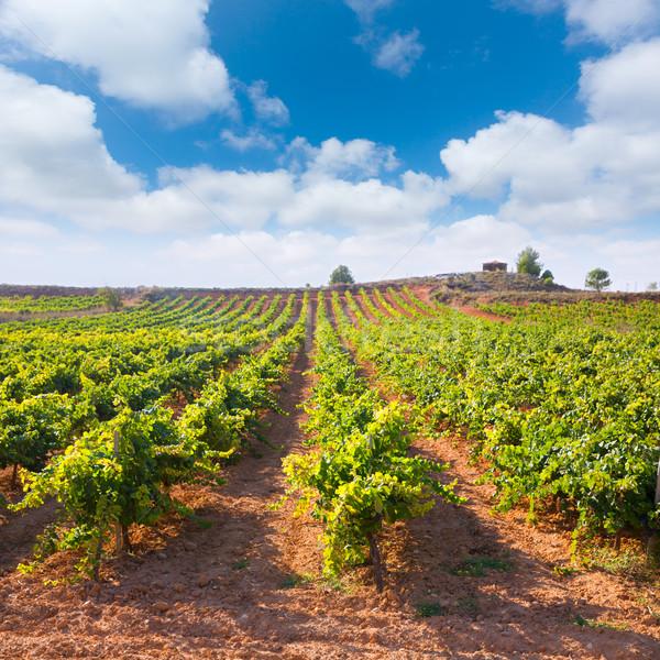 Mediterranean vineyards in Utiel Requena at Spain Stock photo © lunamarina