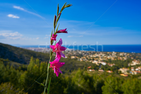Spring pink flowers in Montgo with Denia skyline Stock photo © lunamarina