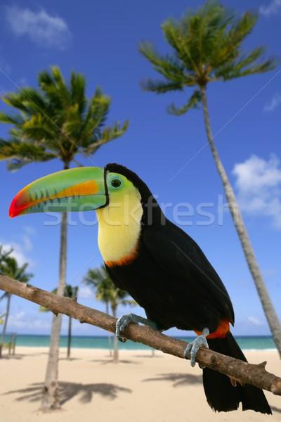 Kuş renkli plaj ağaç doğa yeşil Stok fotoğraf © lunamarina