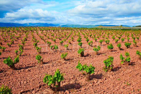 La Rioja vineyard fields in The Way of Saint James Stock photo © lunamarina