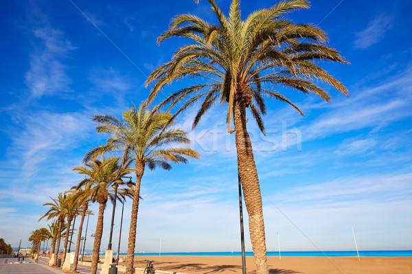 Valencia la strand palmbomen Spanje promenade Stockfoto © lunamarina