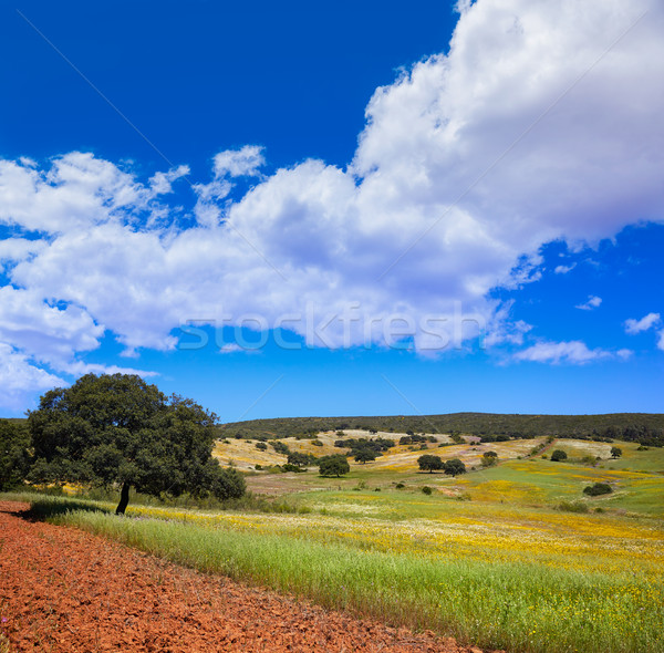 Dehesa grassland by via de la Plata way Spain Stock photo © lunamarina