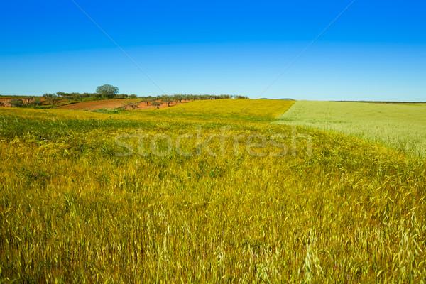 зерновых полях Испания продовольствие пейзаж Сток-фото © lunamarina