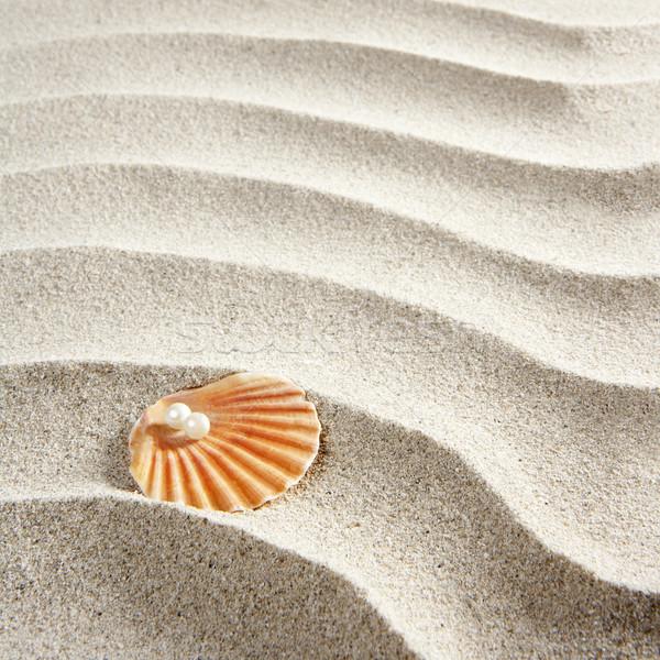 Foto d'archivio: Spiaggia · sabbia · bianca · perla · shell · macro